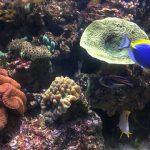 SEA LIFE Korallenriff