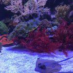 SEA LIFE Koralle und Rochen